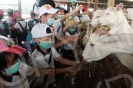 Preschool Graduation Trip to UK Farm 2013