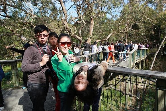 Phillip Islands - Koala Centre